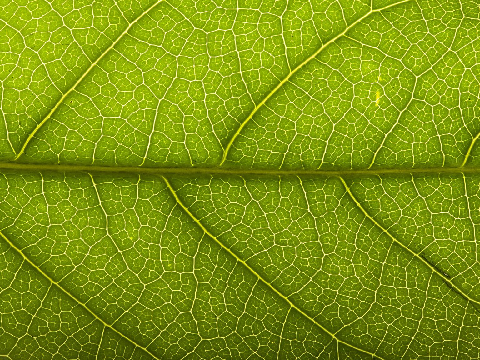 Životní prostředí detail zeleného listu